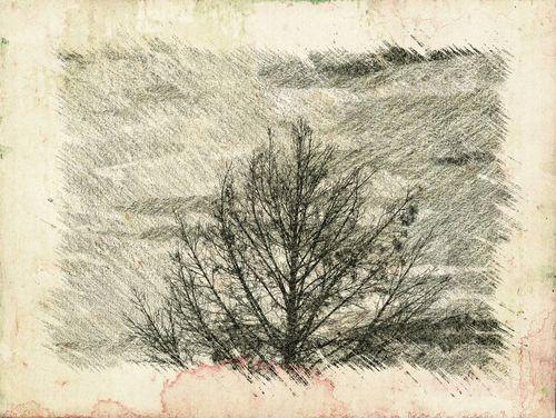 Tree 2.
