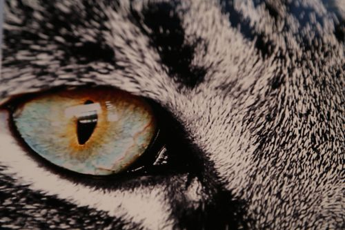 Cats Eyes Change Color Change The Color The Eyes