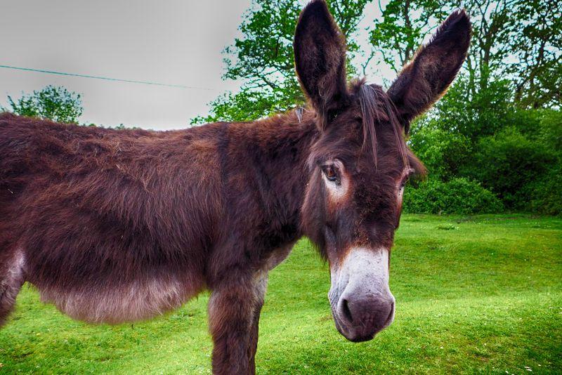 Garden donkey