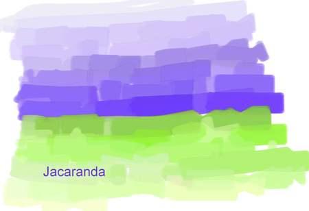 Jacaranda_2